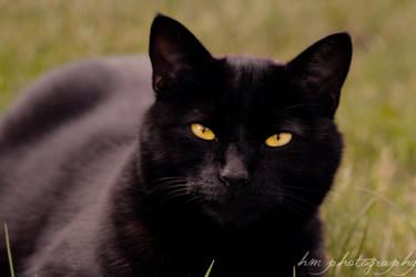 Black cat take II by Hanwombat