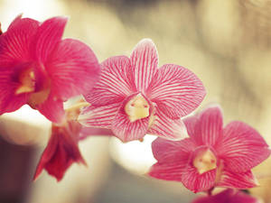 Spring Orchids by WillTC