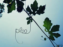 Plee by WillTC