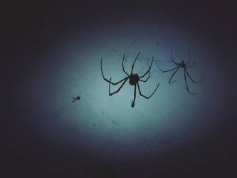 Dear Spiders by WillTC