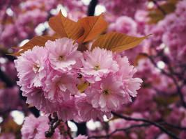 Miss Spring by WillTC