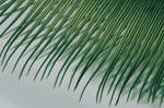 Cycad Touch by WillTC