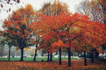 Autumn in the City by WillTC