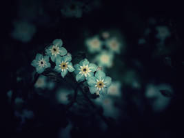 Forget Me Not by WillTC