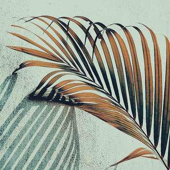 Palm Touch by WillTC