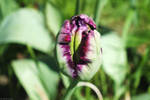 Bloom by WestMauE