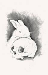 skulls 'n bunnies by rabbit-season
