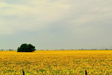 remembering Van Gogh by aripi