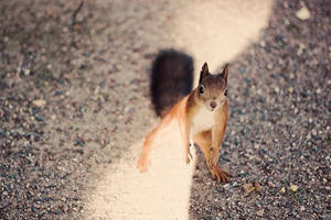 Begging Squirrel by kailay