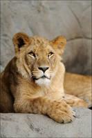 Big Kitty by Svenimal