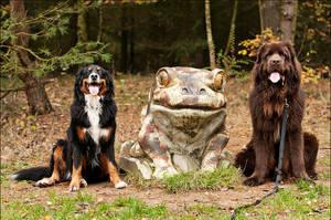 My three dogs by Svenimal