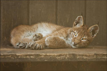 Tired youngster by Svenimal
