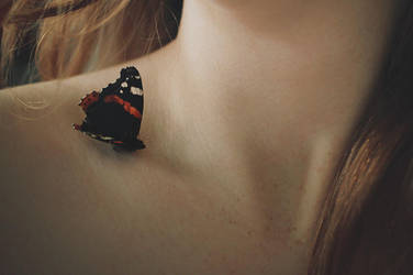 Frostbitten butterfly by Moonlight-Traveller