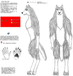 Graydog's Chinese ref sheet by JimWolfdog