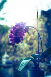 Orchidee by Alle-Dagen-Dromen