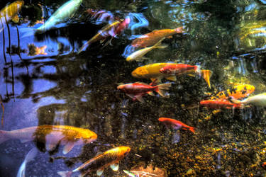 Fishy Party by michaelaranda