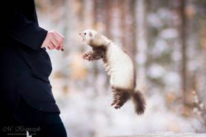 Flying Ferret by TrablaMonRon