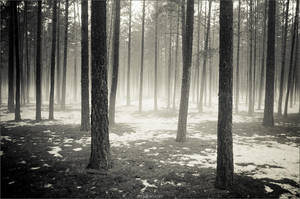 Fairy Tale Forest by artgapan