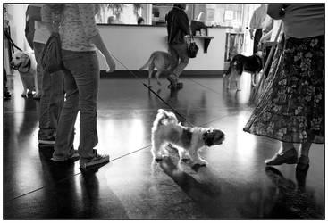 Dogs 'n Art 1 by skippysanchez