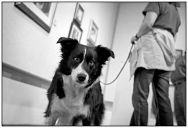 Dogs 'n Art 2 by skippysanchez