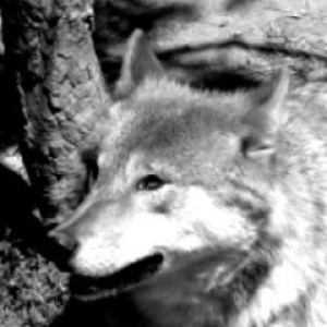 Thonixx's Profile Picture