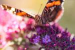 Le Papillon by Yuukon