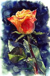 December Rose by kir-tat