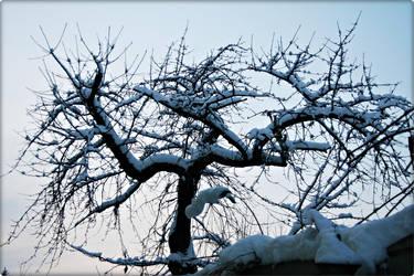 winter 3 by AnnaEPuiu