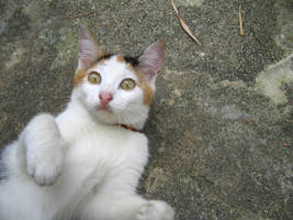 csi cats - calleigh surprised by tnemgarf