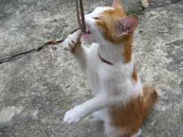 csi cats - ryan by tnemgarf