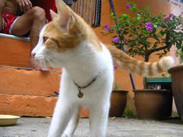 csi cats - horatio by tnemgarf
