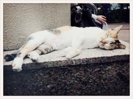 hard at work: sleeping by tnemgarf