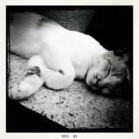 sleeping: peace by tnemgarf