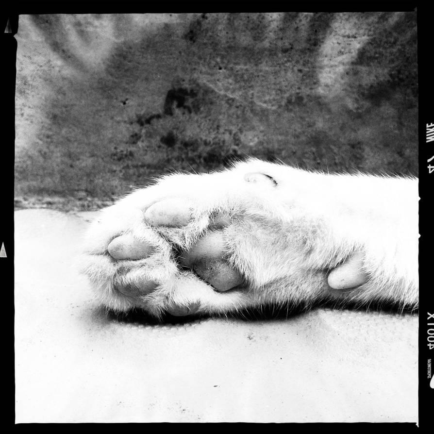 cat paw by tnemgarf
