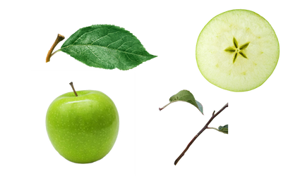 Green apple and apple slice PNG by Jujoy1990