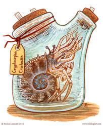 Bottled: Cryptocephus by emmalazauski