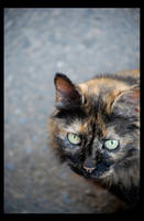 BAD CAT by cemito