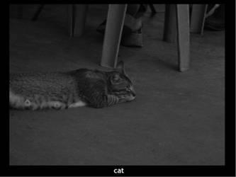 cat1 by redtherat