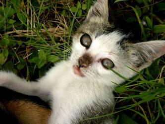 Jodha - The Homeless Cat I by crazybeginner