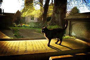 Graveyard Cat by Joetographic