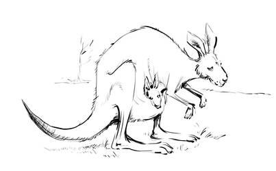 Kangaroo by Ixentrick