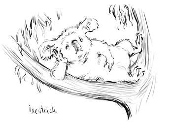 Koala by Ixentrick
