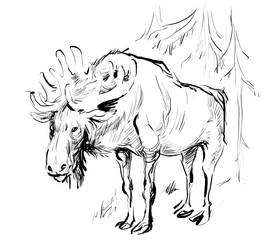Moose by Ixentrick