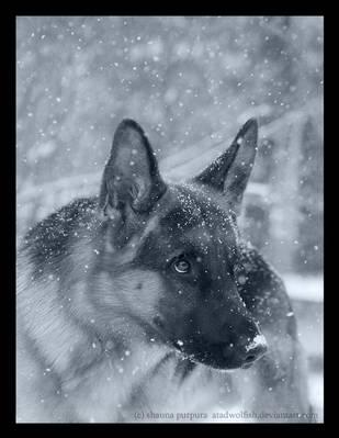 Polar Shepherd by causticxace