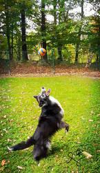 catch!! by causticxace