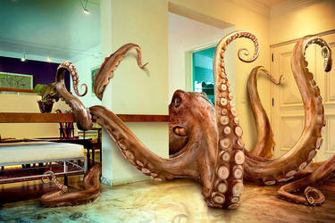 Octopus by leovilela