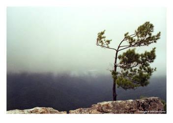 Lonesome tree in Shenandoah by vagari