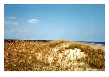 Outer Banks Beach by vagari