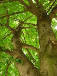 Tree by Plecha