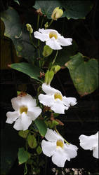 flower3 by Juniper85